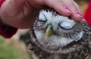 cute owl being there for someone